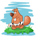 Cartoon funny beaver gnawing on a tree. Royalty Free Stock Photo