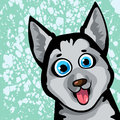 Cartoon funny dog - husky Royalty Free Stock Photo