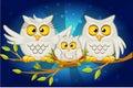 Cartoon funny family of grey owls