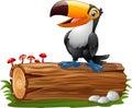 Cartoon funny toucan standing on tree log