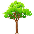 Cartoon green tree isolated on white. Royalty Free Stock Photo