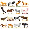Cartoon horse vector cute animal of horse-breeding or equestrian and horsey or equine stallion illustration animalistic Royalty Free Stock Photo