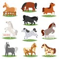 Cartoon horse vector cute animal of horse-breeding or kids equestrian and horsey or equine stallion illustration childly