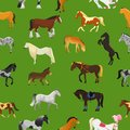 Cartoon horse vector cute animal of horse-breeding or equestrian and horsey or equine stallion illustration animalistic
