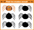 Cartoon  illustration of education will find appropriate shadow silhouette animal spider. Matching game for children of pres Royalty Free Stock Photo