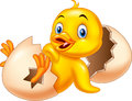 Cartoon new born duckling