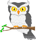 Cartoon owl bird posing on the tree Royalty Free Stock Photo