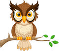 Cartoon owl sitting on tree branch vector illustration of Stock Image