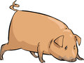 Cartoon pig Stock Photography