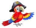 Cartoon pirate parrot a character with an eye patch and tricorn hat with skull and cross bones pointing with its wing Stock Photos