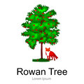 Cartoon rowan summer tree on a white background icon, outdoor park with branch, leafs on green grass vector