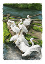 Cartoon scene with birds resting near the water - pelicans Royalty Free Stock Photo
