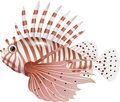Cartoon scorpion fish isolated on white background Royalty Free Stock Photo
