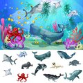 Cartoon Sea And Ocean Fauna Concept Royalty Free Stock Photo