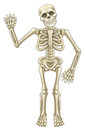 Cartoon Skeleton Waving Royalty Free Stock Photo