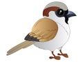 Cartoon Sparrow Vector Illustration Clipart Royalty Free Stock Photo