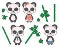 Cartoon style cute giant panda bear girls and boys with clothing and bamboo vector illustration