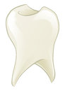 Cartoon tooth an illustration of a shiny Royalty Free Stock Photo