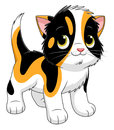 Cartoon tortie kitten