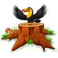 Cartoon toucan on tree stump