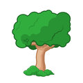 Cartoon tree isolated vector illustration on white background Royalty Free Stock Image