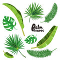 Cartoon tropical palm leaves set. Vector illustrated on white background.  Flat vector hand drawn palm tree elements. Royalty Free Stock Photo