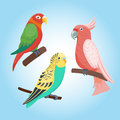 Cartoon tropical parrot wild animal bird vector illustration wildlife feather zoo color nature vivid.