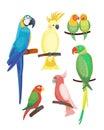 Cartoon tropical parrot wild animal bird vector illustration wildlife feather zoo color nature vivid.