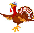 Cartoon turkey illustration of a Stock Photos