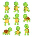 Cartoon turtle. Cute kids turtles, wild animals character set. Tortoise characters vector animal illustration collection