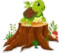 Cartoon turtle and frog posing