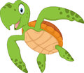 Cartoon turtle isolated on white background