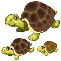 Cartoon turtle on white background. Vector animals