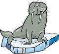 Cartoon Walrus on floating ice Stock Photo