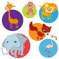 Cartoon wild animals Royalty Free Stock Images