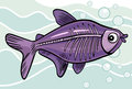 Cartoon x-ray fish Royalty Free Stock Image