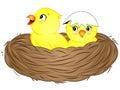 Cartoon Yellow Baby Birds in Nest