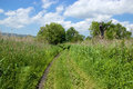 Cartway through field rural road lined with high grass Royalty Free Stock Photo
