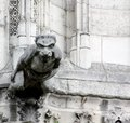 Carved gargoyle a lone outstretched stone appears to be soaring straight out from notre dame cathedral paris france Stock Images