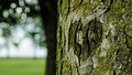 Carved heart shape on the tree Royalty Free Stock Photo