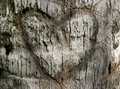 Carved Heart in Tree Bark Royalty Free Stock Photo
