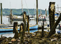 Carved piers with seaweed hair stand guard at a harbor in belfast maine Stock Images