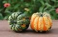 Carvinal acorn squash Royalty Free Stock Photo