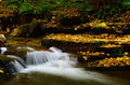 Cascade and fall leaves rushing golden showing amazing nature transition Royalty Free Stock Photos