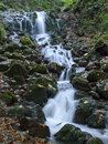 Cascade in Forest Stock Photography