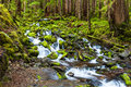 Cascade waterfall in rain forest olympic national park Royalty Free Stock Image