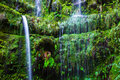 Cascade in the wild laural forest of madeira portugal Royalty Free Stock Photos