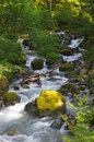 Cascading spring Stock Images