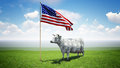 Cash cow standing on the green grass field under the american flag Royalty Free Stock Image