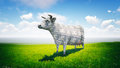 Cash cow standing in the lush green field on a sunny day Stock Photo